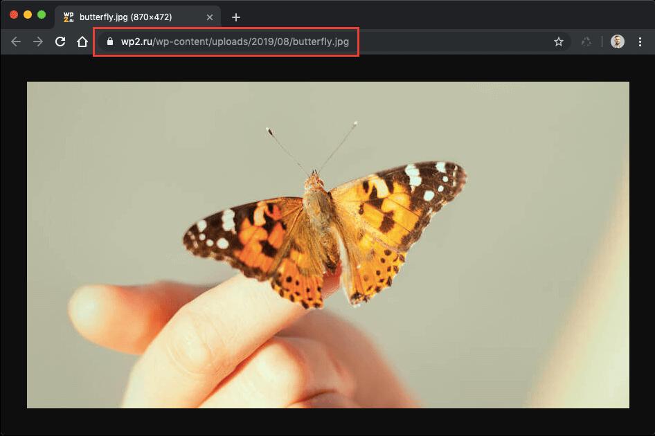 URL-адрес в строке браузера