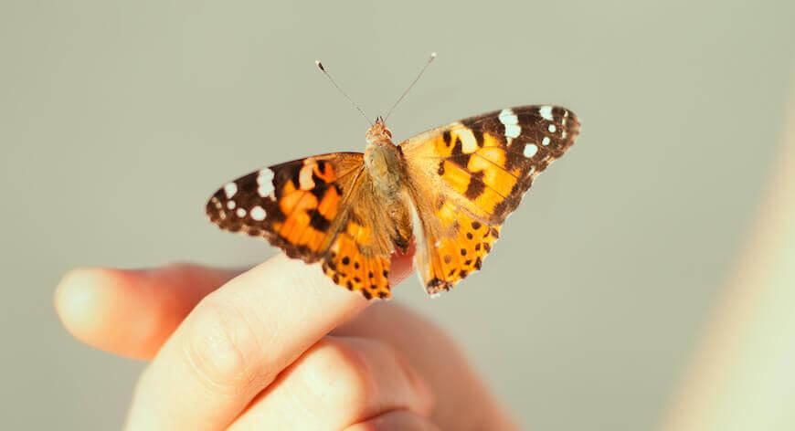 WordPress Butterfly